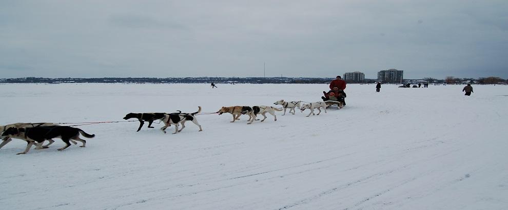2014年2月1,2日参加狗拉雪橇冰雪节,Snow Valley滑雪,滑雪胎