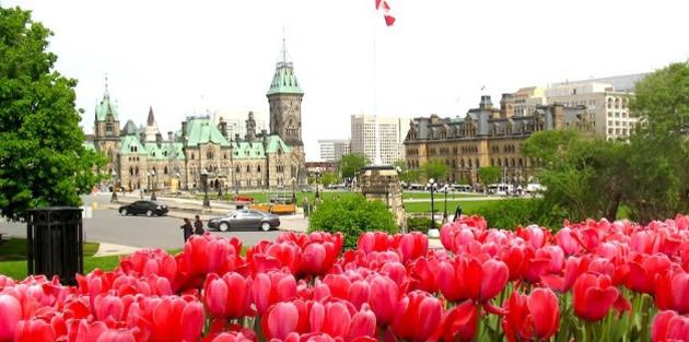 Ottawa Tulip Festival Images Ottawa Tulip Festival