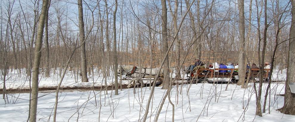 枫树糖浆之旅 – 参观Mountsberg和Crawford Lake保留地