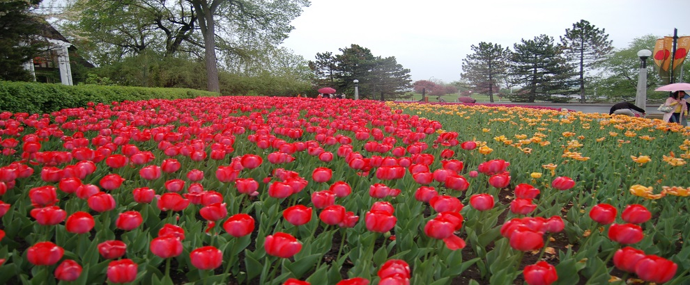 2016 Ottawa Tulip Festival One Day Tour